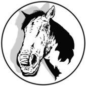 The white horse — Stock Photo