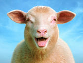 Luci the sheep — Stock Photo