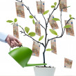 Stock Photo: Water money tree