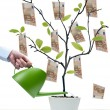 Water the money tree — Stock Photo