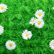 Artificial grass with Daisies — Stock Photo