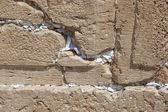 Prayers in the Western Wall Jerusalem — Stock Photo