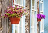 Dış bir sepet ile canlı rengarenk petunyalar dolu — Stok fotoğraf