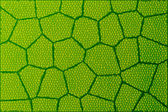 Leaf under microscope — Stock Photo