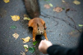 Feeding a squirrel — Stock Photo