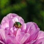 Beautiful bug — Stock Photo #24017223