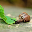 Stock Photo: Small snail