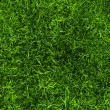 Grass texture — Stock Photo #14574921