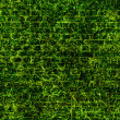 Grass texture — Stock Photo
