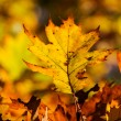 Autumn leaves — Stock Photo #14779949