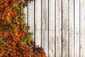 Fondo de otoño — Foto de Stock