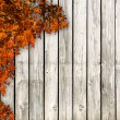 Stock Photo: White board with autum coloured leaves