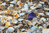 Background of shells — Stock Photo