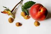 Dry rose and apricot seeds — Stock Photo