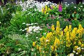 Beautiful garden — Stock Photo