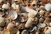 Shells and jewelry — Stock Photo