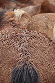Islak atlar — Stok fotoğraf