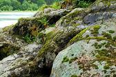 Natura — Foto Stock