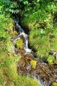 Mountain creek — Foto Stock