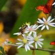 Stock Photo: Of Bees and Butterflies