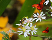 Of Bees and Butterflies — Stock Photo