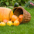 Autumn decoration — Stock Photo #14588279