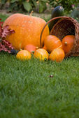 Pumkins on grass — Stock Photo
