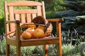Pumkins en silla — Foto de Stock