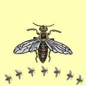 Fliegen isoliert — Stockvektor