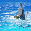 Dolphin with ball — Stock fotografie