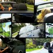 Montage Female Driving Luxury Cabriolet Car - Stok fotoraf