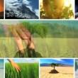 Montage of natures life and ecosystems - Stok fotoğraf
