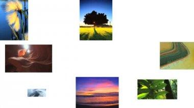 Montaż natury życia i ekosystemy — Wideo stockowe