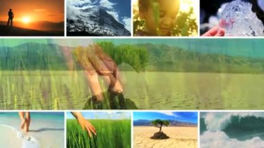 Montage of natures life and ecosystems — Stock Video