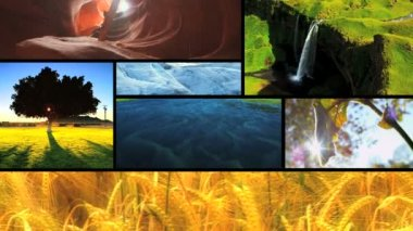 Montage of natures ecosystems — Stock Video