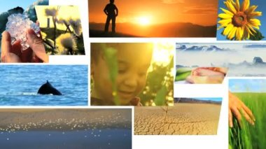 Montage of developing life and ecosystems — Stock Video