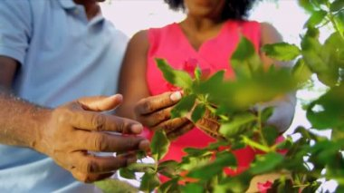 Hands Only Ethnic Couple Holding Flowers — Stock Video