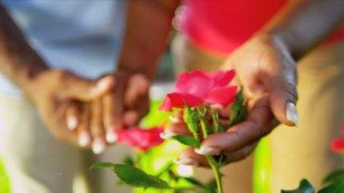 Senior Ethnic Hands Tending Flower Bushes — Stock Video