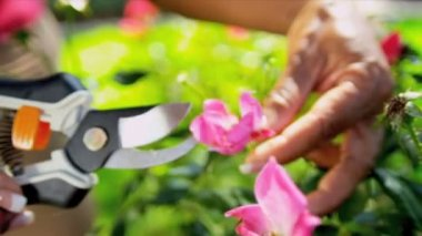 Hands Only Ethnic Couple Pruning Flowers — Stock Video