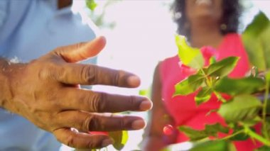 Senior Ethnic Hands Tending Flower Bushes — Stock Video