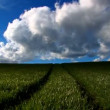Green grass fields and clean environmental image - Stock Photo