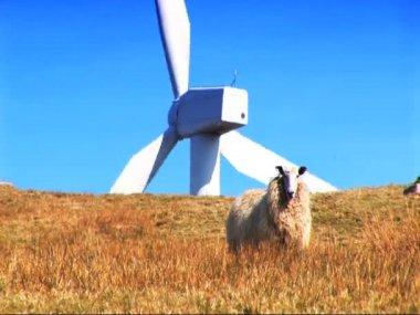 Parque eólico de energia produção de energia no ambiente — Vídeo Stock