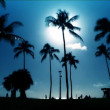 Palm trees in silhouette at sundown - Stock Photo