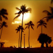 Palm trees in silhouette at sunset — Stock Video
