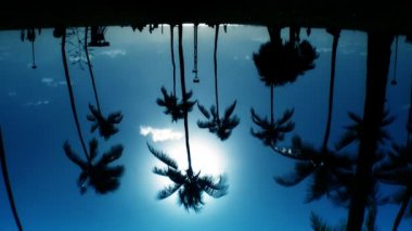 Reflections of & palm trees in silhouette — Stock Video