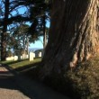 Stock Video: Americmemorial Cemetery in SFrancisco