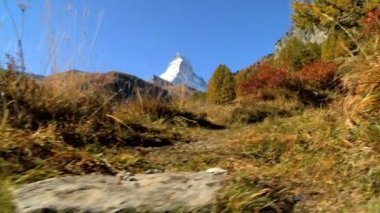 Fall in an alpine meadow Zermatt with hikers & the Matterhorn — Stock Video