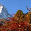 Fall in alpine meadow Zermatt with Matterhorn — Stock Video #19515523