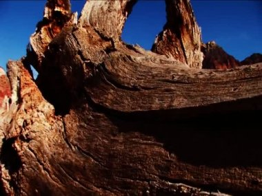 The beauty of nature found in a national park — Stock Video
