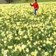 Cute african american child playing in a field of daffodils - Zdjcie stockowe